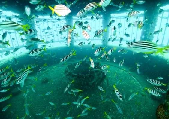 World-first major desalination field study finds minimal marine impact