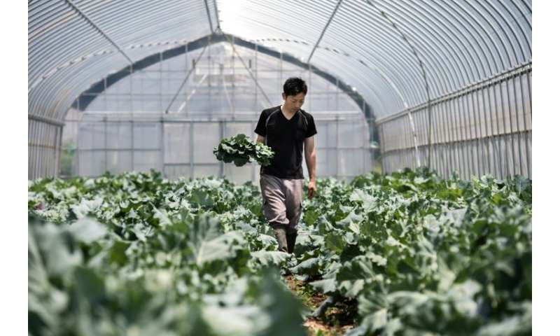 Yuya Shibakai working at his organic vegetable farm outside Tokyo, where he produces organic lettuce, tomatoes, carrots and othe