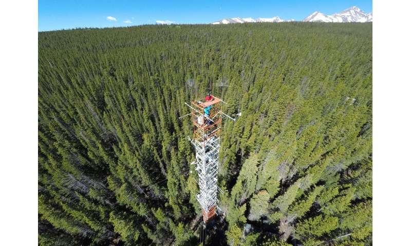 A forest 'glow' reveals awakening from hibernation