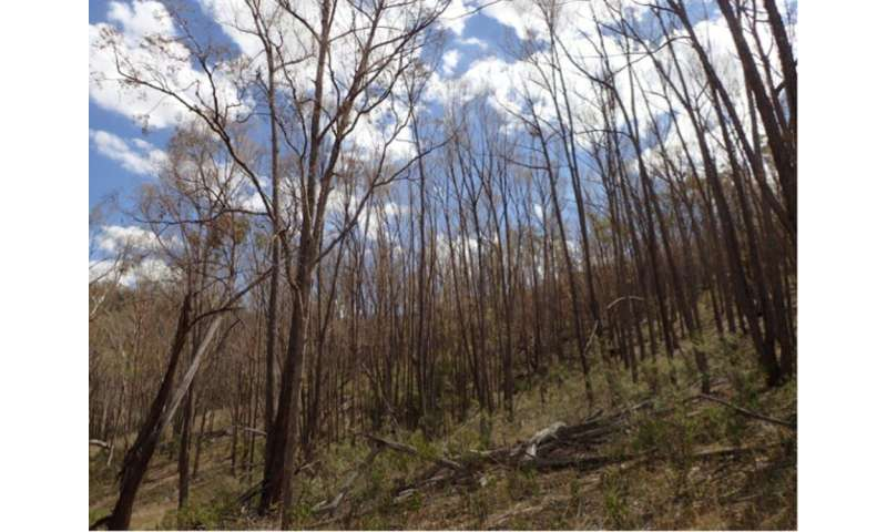 Are more Aussie trees dying of drought? Scientists need your help spotting dead trees