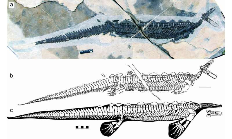 A reptile platypus from the early Triassic