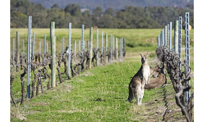 A warning for wine-lovers: climate change is messing with your favourite tipple's timing