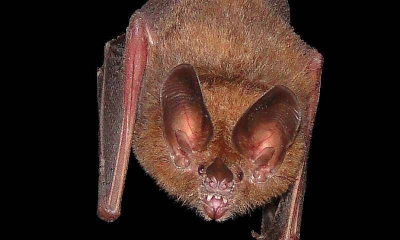 Bats use leaves as mirrors to find prey in the dark