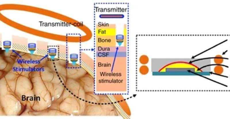 Biotechnology: Using wireless power to light up tiny neural stimulators