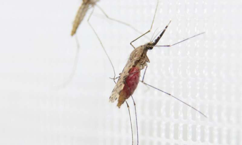 Botox cousin can reduce malaria in an environmentally friendly manner