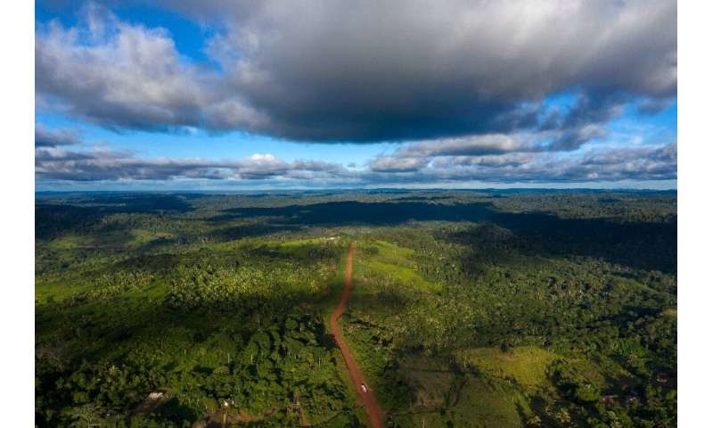 Brazil's rich biodiversity is under attack from multiple fronts, including landowners who cut down multi-storied trees to make w