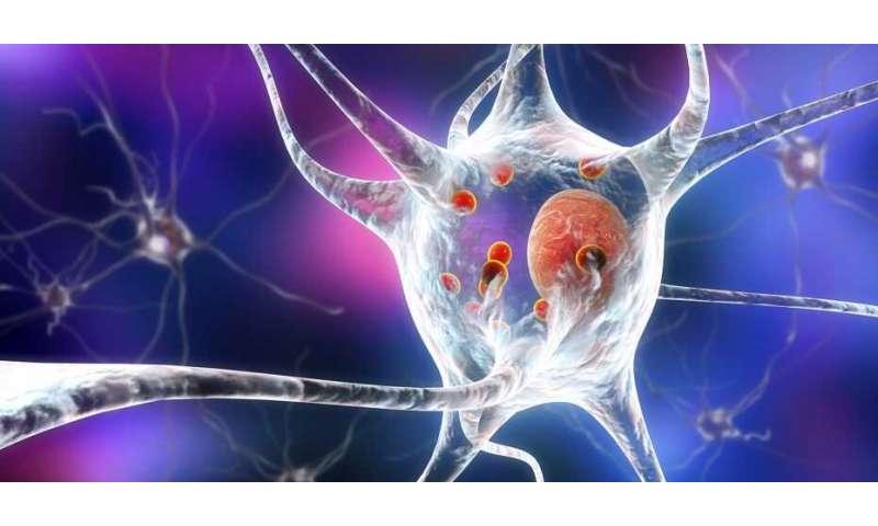 Breaking down pathological protein aggregates