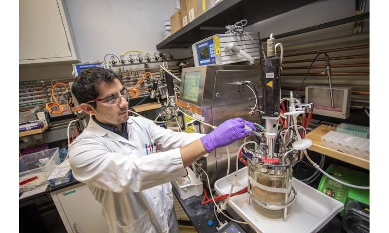 Bright skies for plant-based jet fuels
