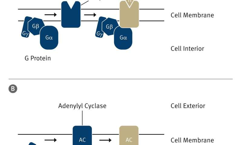 Bringing information into the cell