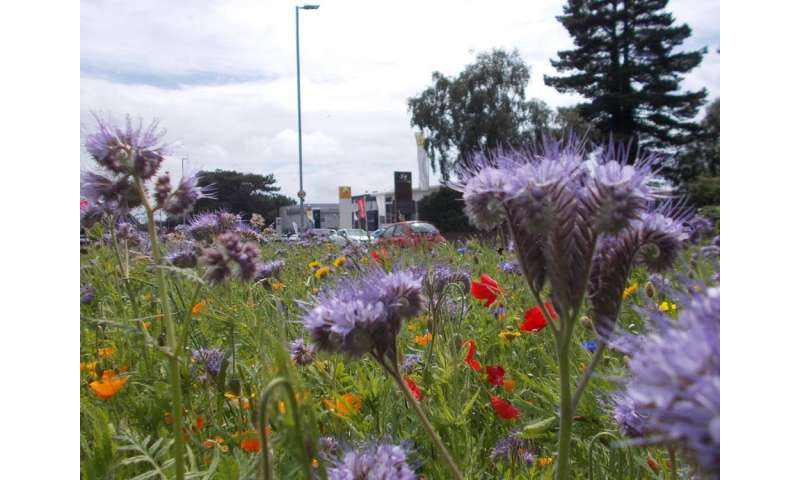 City bees' favourite flowers, according to our DNA tracking experiment
