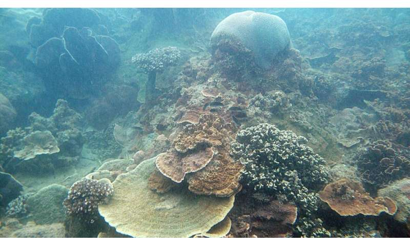 Corals in Singapore likely to survive sea-level rise: NUS study