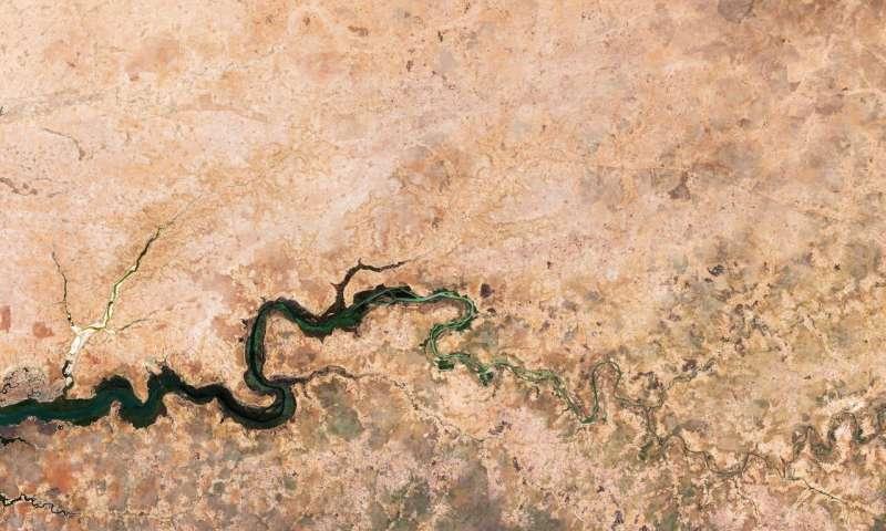 Image: Desert greenery