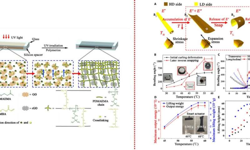 Developing a dual-gradient ultrafast biomimetic snapping hydrogel material