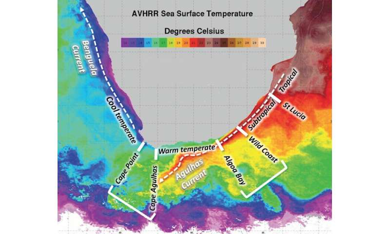 Differences in water temperature can create new marine species