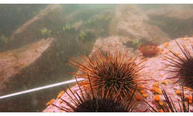 DNA analysis reveals cryptic underwater ecosystem engineers