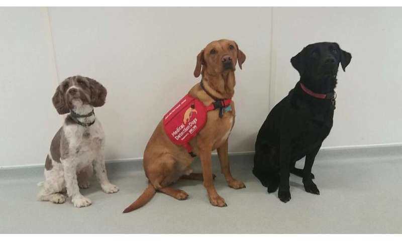 Dog detectives sniff out harmful bacteria causing lung infections