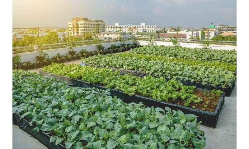 Eight ways to halt a global food crisis