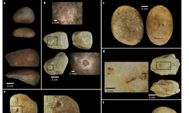 Evidence found of capuchin monkeys using tools 3000 years ago