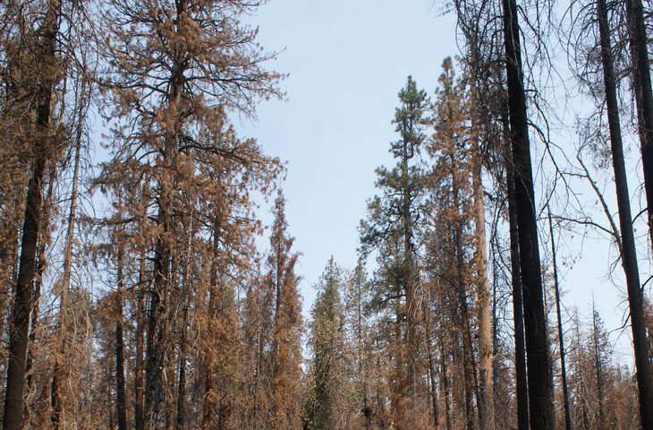 Forest carbon still plentiful post-wildfire after century of fire exclusion