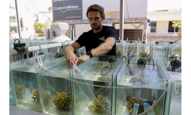 French marine biologist Guilhem Banc-Prandi (pictured), who has founded the NGO WeSea, is working on a doctorate and studies the