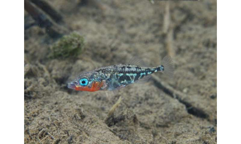 Freshwater find: Genetic advantage allows some marine fish to colonize freshwater habitats