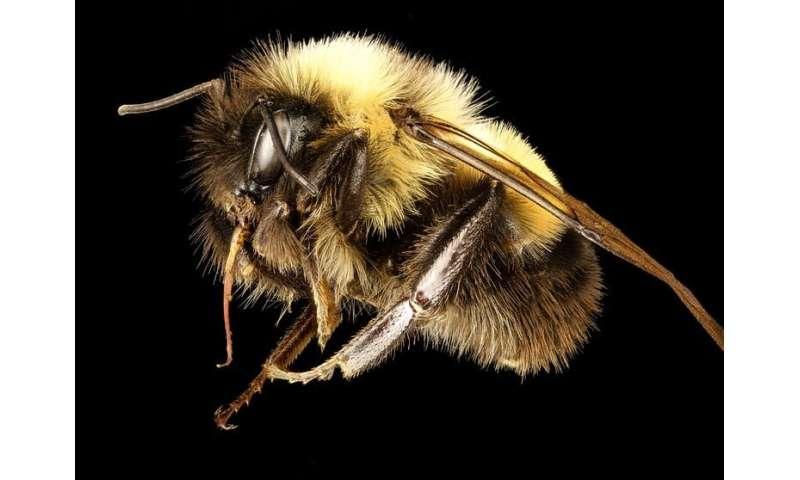 Dale una oportunidad a las abejas: no podemos permitirnos perder a nuestros polinizadores nativos salvajes