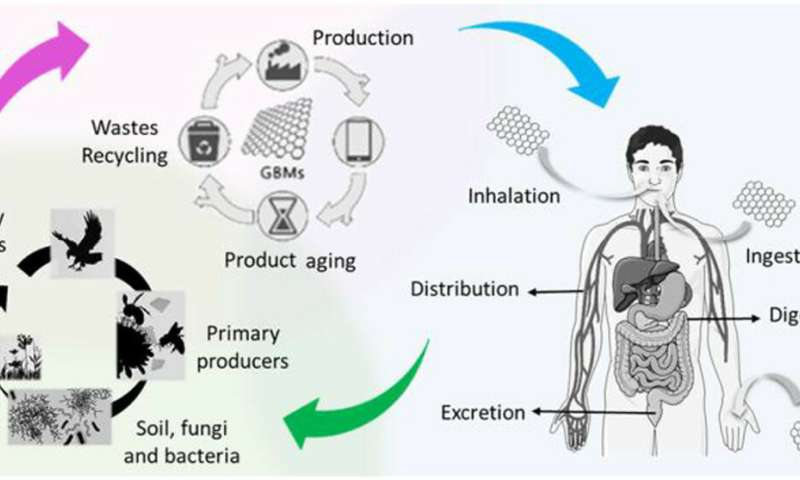 Graphene and related materials safety: human health and the environment
