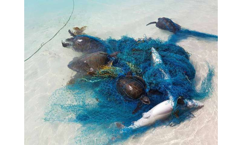Hundreds of sharks and rays tangled in plastic