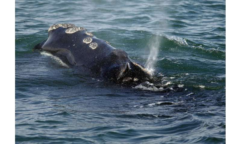 In hot water? Study says warming may reduce sea life by 17%