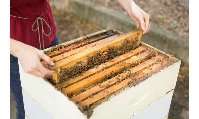 Intensive beekeeping without blame for common bee diseases.
