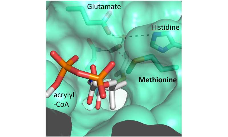 In the active centre of carbon dioxide conversion