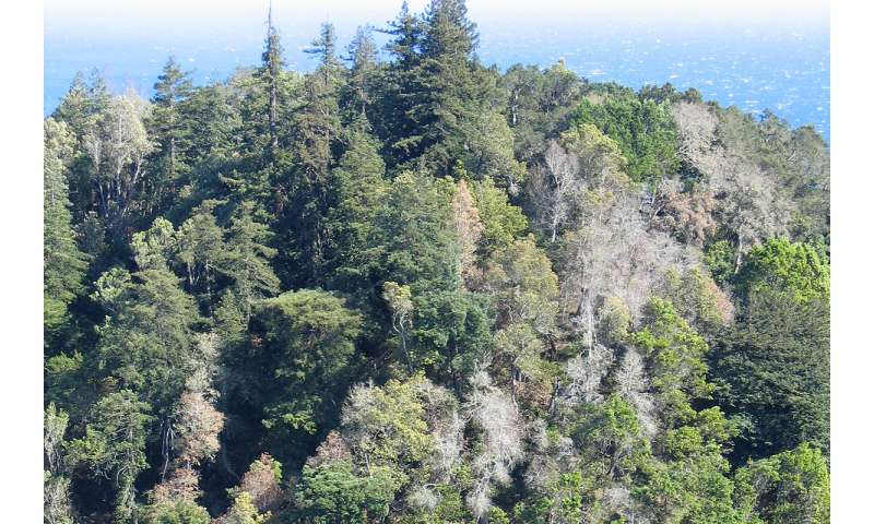 Is habitat restoration actually killing plants in the California wildlands?