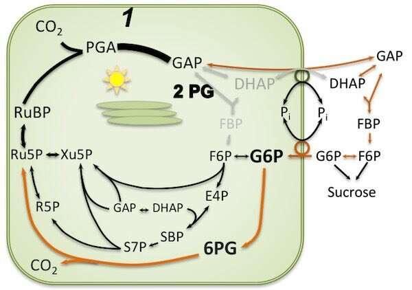 Mantener las plantas alimentadas: el funcionamiento de un sistema de respaldo de fotosíntesis