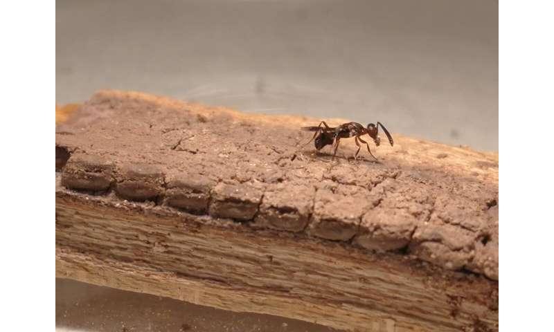 La inminente invasión de insectos amenaza el vino de California y los aguacates