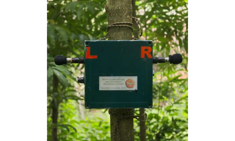 Monitoring biodiversity with sound: How machines can enrich our knowledge