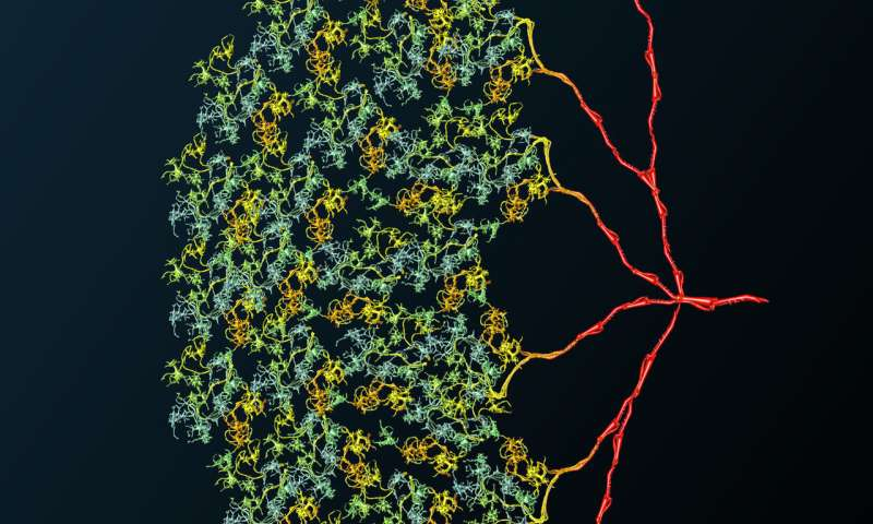 Multitasking with perfection: Nerve cell works like 1400 individual cells
