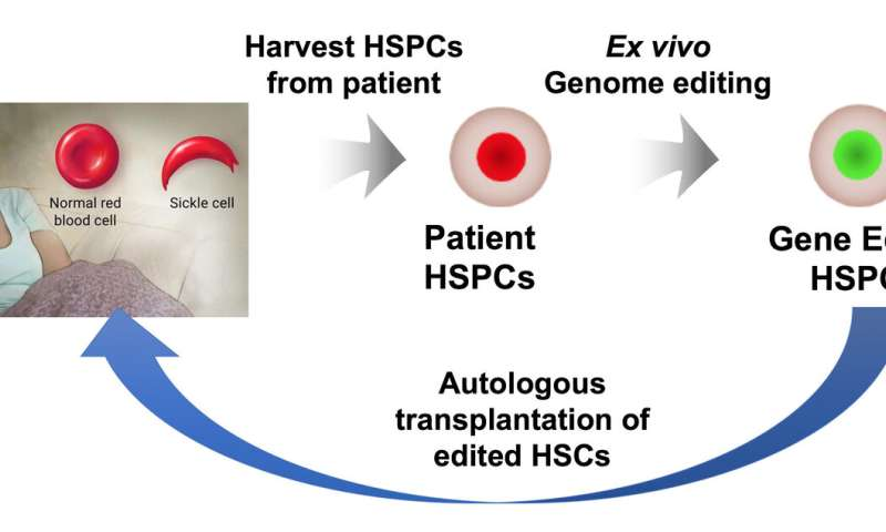New genetic weapons challenge sickle cell disease