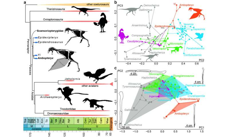 New Jurassic non-avian theropod dinosaur sheds light on origin of flight in Dinosauria
