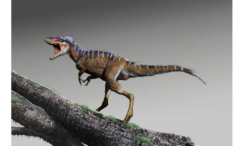 New species of tiny tyrannosaur foreshadows rise of T. rex