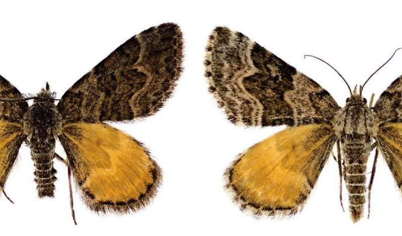 New to science New Zealand moths link mythological deities to James Cameron's films