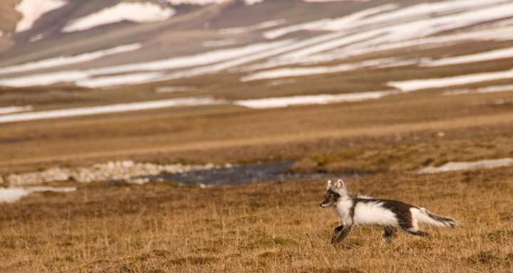 No evidence for increased egg predation in the Arctic