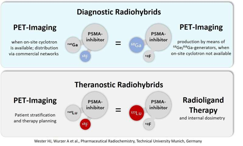 Nuclear medicine PSMA-targeted study offers new options for cancer theranostics worldwide