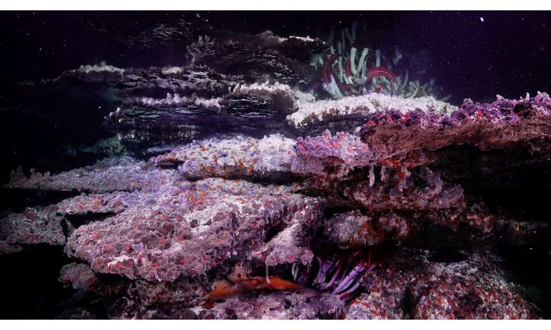 Otherworldly mirror pools and mesmerizing landscapes discovered on ocean floor