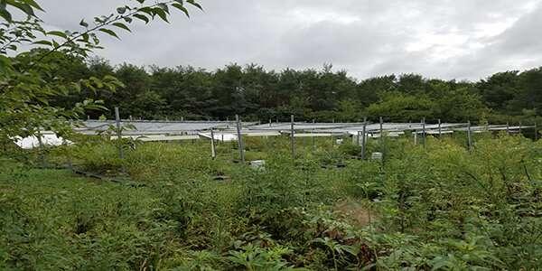 OU study finds climate warming accelerates tallgrass prairie bioiversity