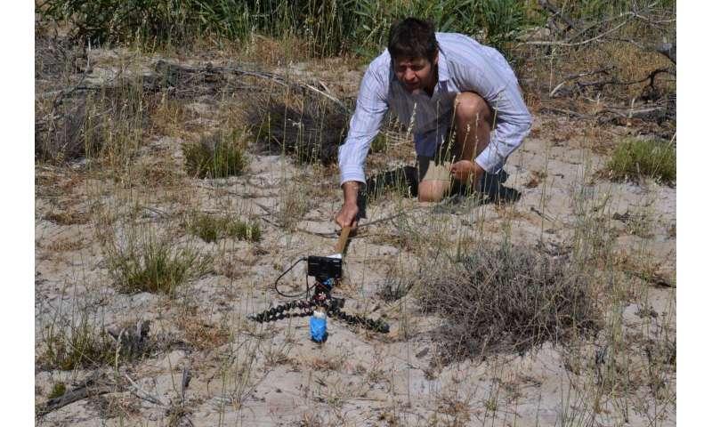 Quantum dots capture speciation in sandplain fynbos on the West