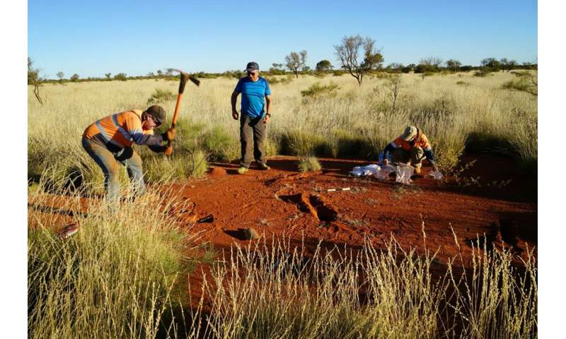 Researchers get to the bottom of fairy circles