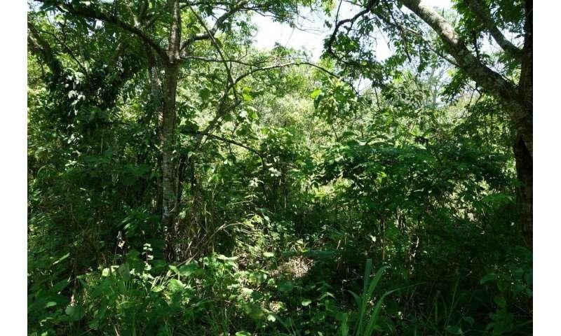 Restaurar los bosques naturales para alcanzar los objetivos climáticos globales.