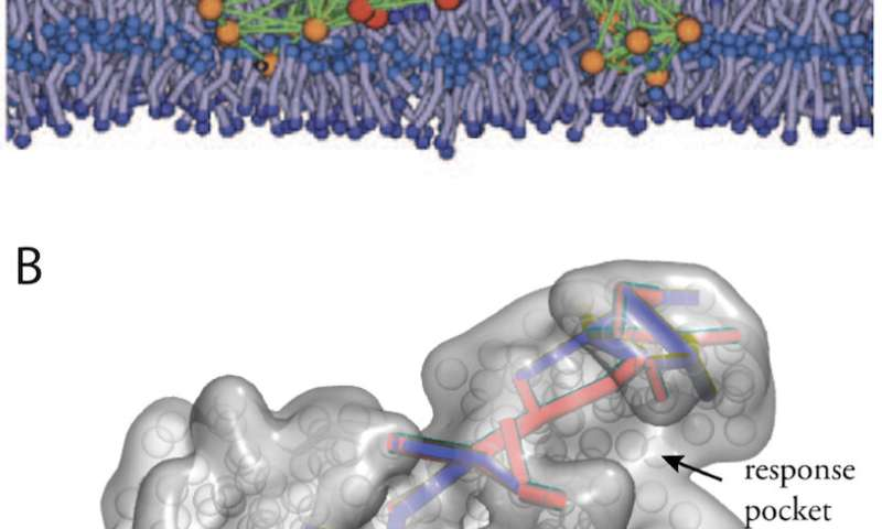 Review emphasizes the power of simple physical models for complex protein machines