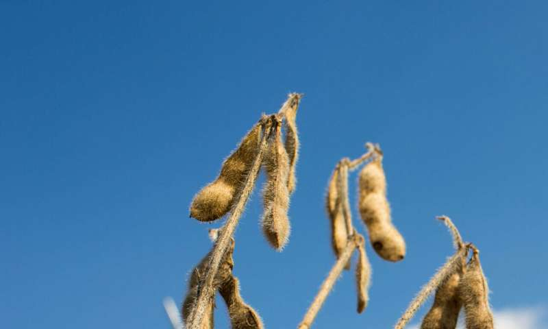 El aumento de las temperaturas puede salvaguardar la nutrición de los cultivos ya que los cambios climáticos