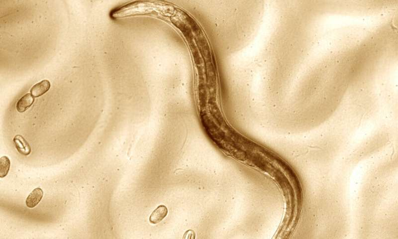 Scientists teach old worms new tricks